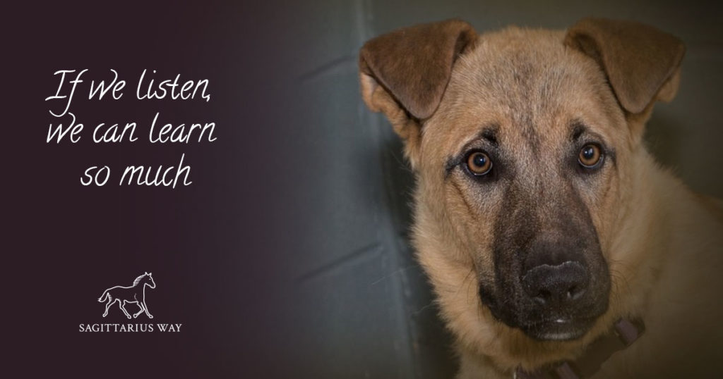 A touching heart to heart with Nena the rescue dog