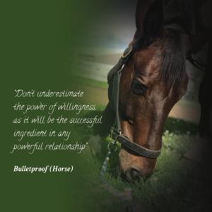 horse animal quote