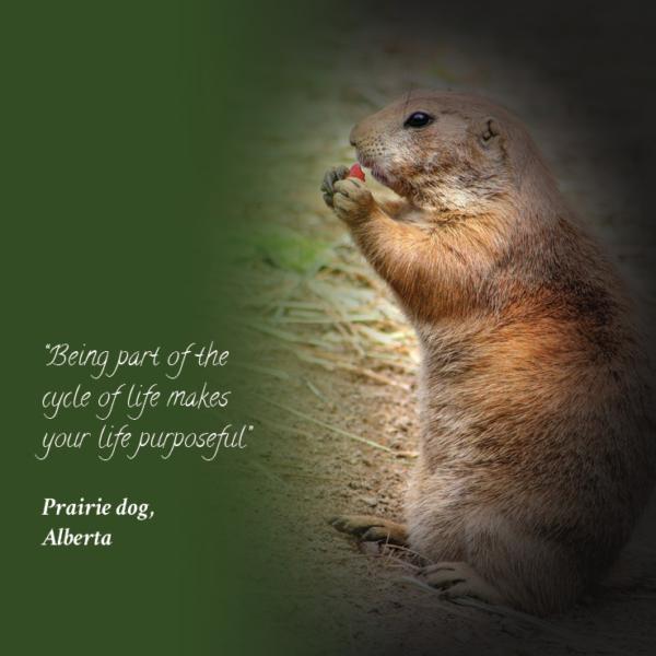 prairie dog animal quote