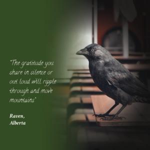 raven animal quote
