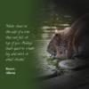 beaver animal quote