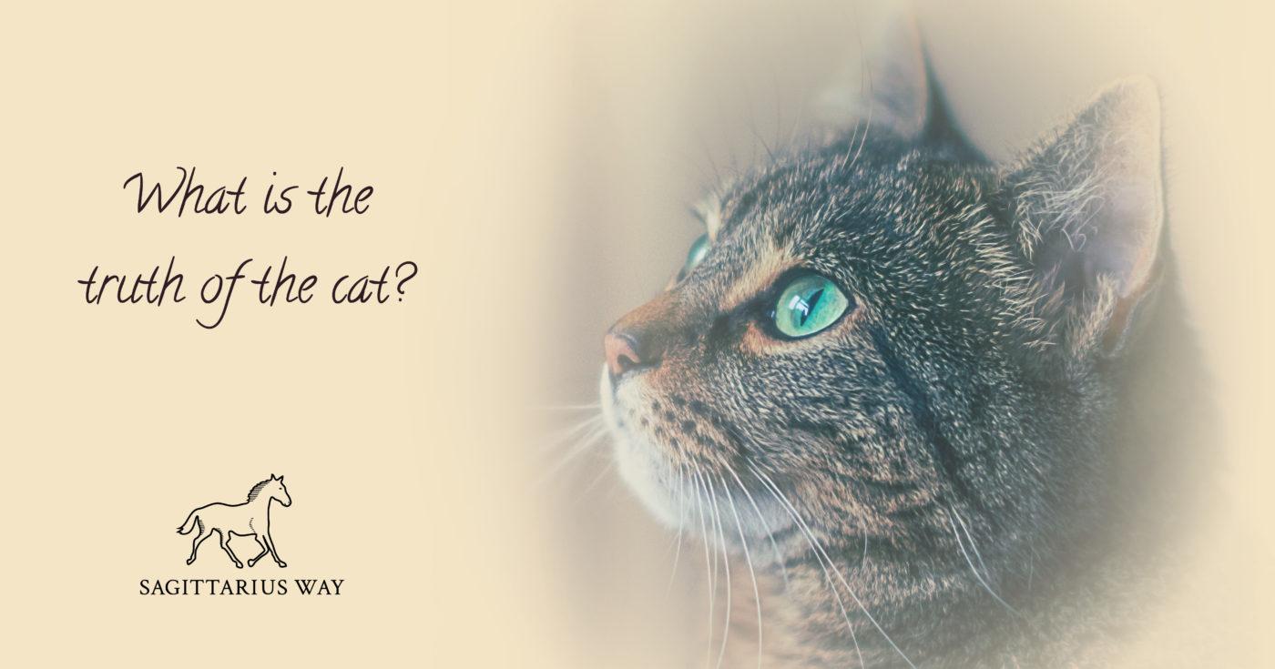 sagittariusway cats